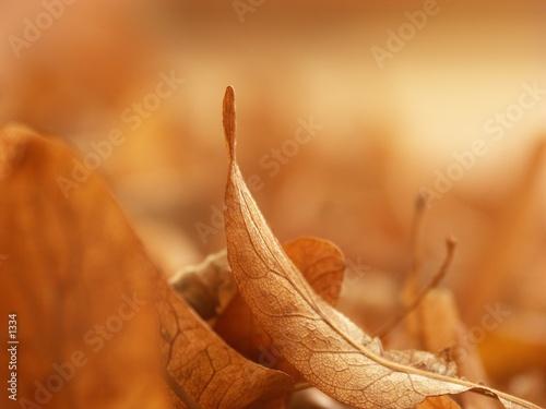 Fotografija  Automne