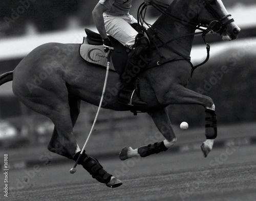 Cadres-photo bureau Equitation balle de match