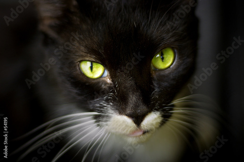 Canvas Prints Panther green eyes