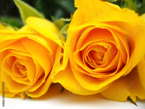 Fotobehang Macro yellow roses