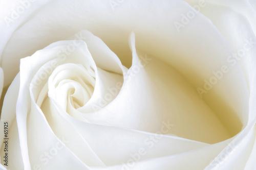Obrazy kwiaty   zmyslowa-zmyslowosc