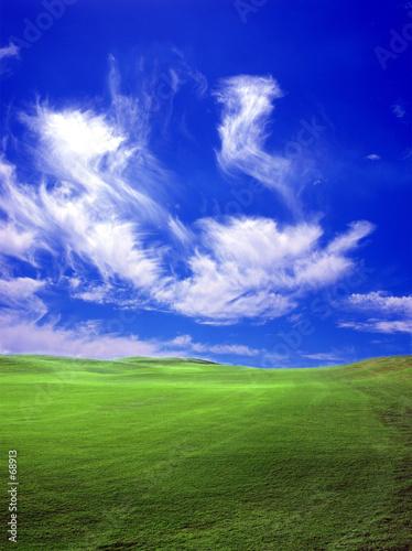 Spoed Foto op Canvas Donkerblauw green field