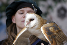 Bird Trainer Holding An American Barn Owl
