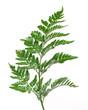canvas print picture - brilliant green