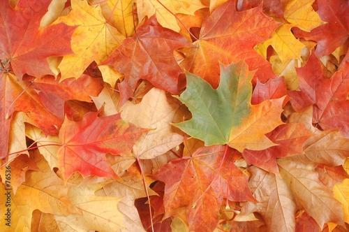 Foto-Duschvorhang - leaves (von Andrzej Tokarski)