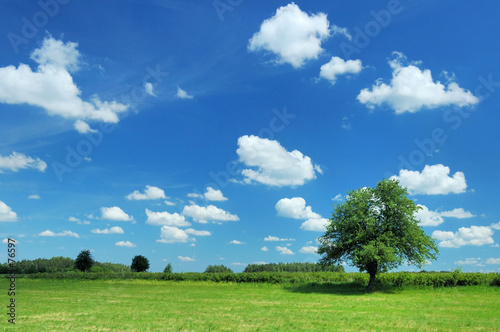 Foto auf Gartenposter Landschappen summer landscape