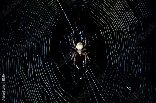 spider in the dark Canvas Print