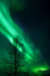 Leinwanddruck Bild - aurora and a tree
