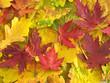 Leinwandbild Motiv colors of fall