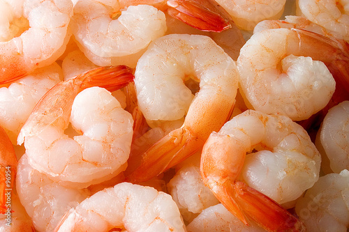 Poster Coquillage shrimps