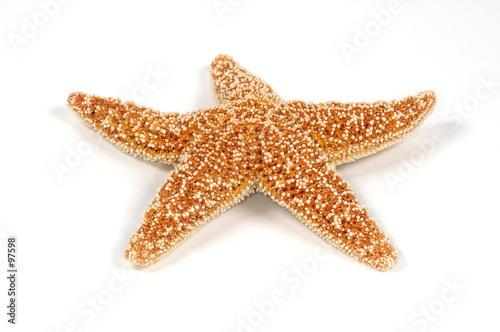 starfish Fototapeta