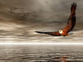 Panel Szklanyaccipitridae, american bald eagle.