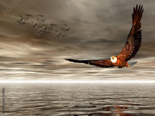 Photo accipitridae, american bald eagle.