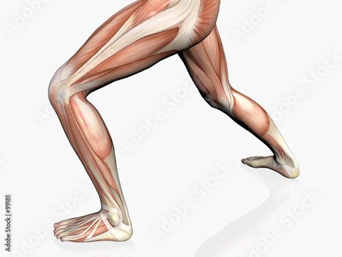 Photo anatomy of the man, muscular man.