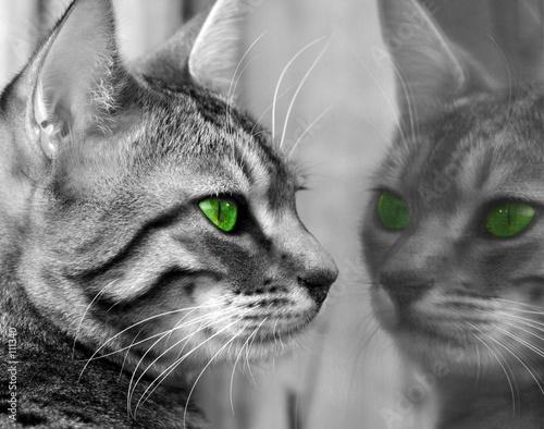Foto-Vorhang - green eyed monster (von marilyn barbone)