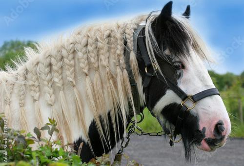 Foto-Kuscheldecke premium - the gypsy horse (von marilyn barbone)