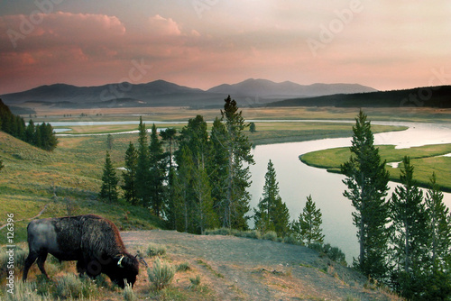 Keuken foto achterwand Buffel yellowstone national park