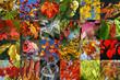 canvas print picture autumn collection