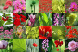 canvas print picture flower collection