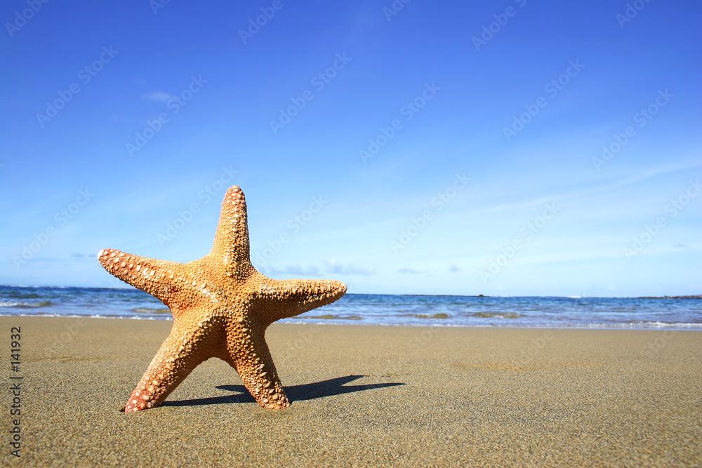 Foto-Doppelrollo - estrellade mar