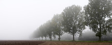 Panoramic - Row Of Trees On Th...