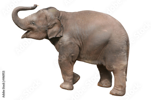 Staande foto Olifant baby elephant