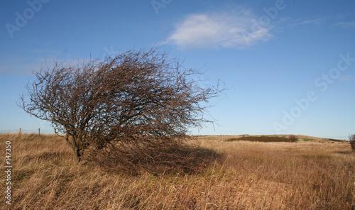 Foto  wind swept tree