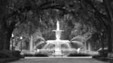 Fototapeta Sawanna - savannah fountain
