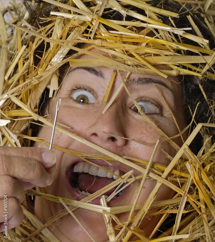 Tablou Canvas needle in haystack