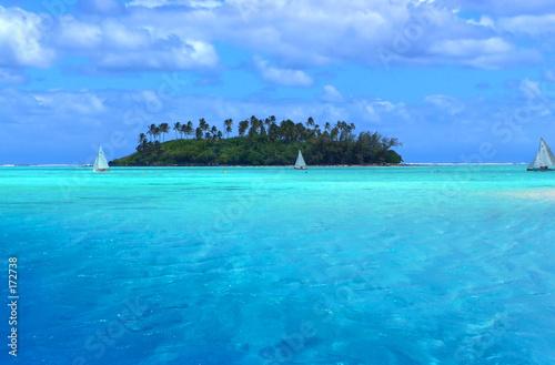 Fotografie, Obraz  tropical fun