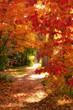 canvas print picture - autumn walk