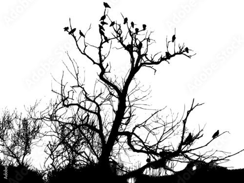 Photo sur Toile Oiseaux sur arbre birds in tree