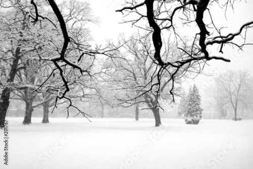 Foto-Tapete - winter scene (von Jabe2533)