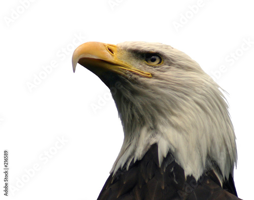 Fotobehang Eagle bald eagle, isolated