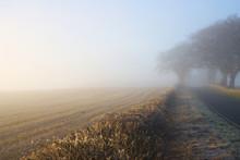 Foggy Day 3