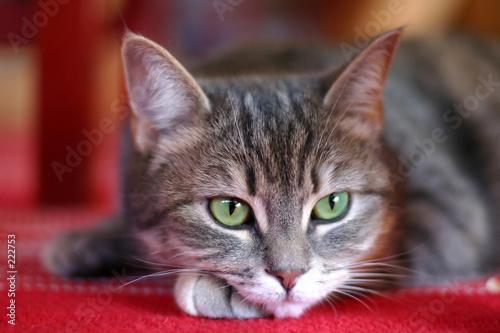 Keuken foto achterwand Kat cat