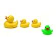 canvas print picture - rubber ducks