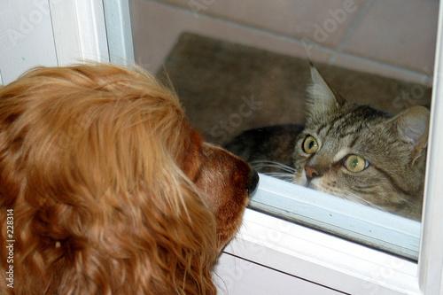 Fotografie, Obraz  comme chien et chat