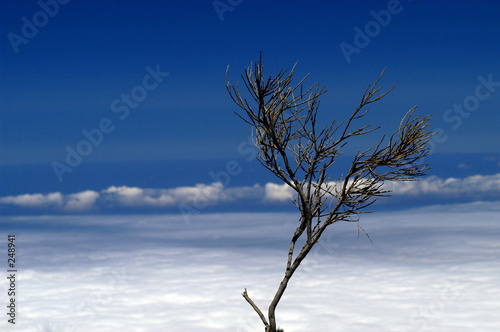Foto-Vorhang - bush (von Rui Vale de Sousa)