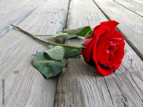 Poster Rouge, noir, blanc rose on wood