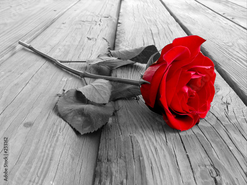 Poster Red, black, white rose on wood bw