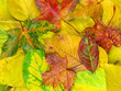 canvas print picture autumn background