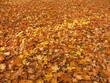 Leinwandbild Motiv dead leaf cover
