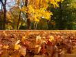 Leinwandbild Motiv autumn in the park