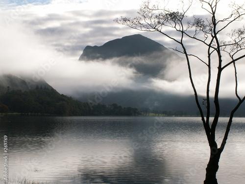 Poster Marron chocolat misty lakeside tree