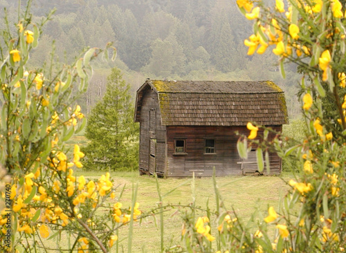 Tuinposter Zwavel geel old barn in spring