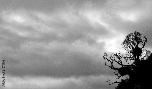 mroczne-drzewo-w-rogu-fotografii-na-tle-pochmurnego-nieba