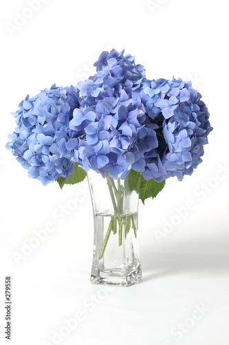 hydrangeas in vase Wallpaper Mural