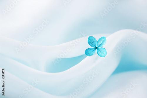 niebieski-kwiat-na-abstrakcyjnym-jasnym-tle