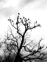 Tree With Pigeons